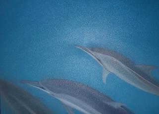 b08-les-dauphins